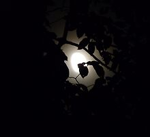 Hiding - Leaves Over Moon by Menega  Sabidussi