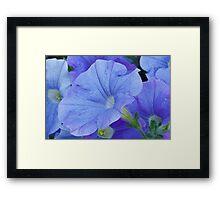 Blue Petunia Blossom Framed Print