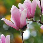 Magnolias & oranges by Lynn Starner