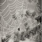 B&W Spider Web Cell Case by Jonicool