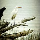 Egret on a Fallen Tree Cell Case by Jonicool