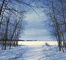 Wintertime At Sheldon Marsh by SRowe Art