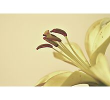Full of Grace Photographic Print