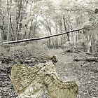 A flight of Angels by Diane  Kramer