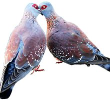 LOVE - DOVES by Pete Klimek