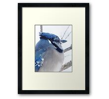 Feeling a Little Blue Framed Print