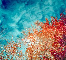 Infrared fall colours / Automne infrarouge by maophoto