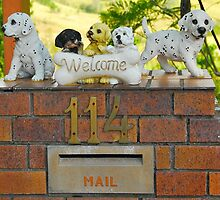 Woofer Welcome Box by Penny Smith