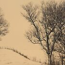 a winter's day lament by JOSEPHMAZZUCCO