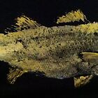 Striped Bass  by IslandFishPrint