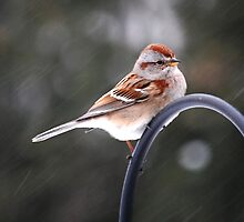 Bird on Snowy Day by Laurie Minor
