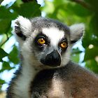 Dappled Light Lemur by Margaret Saheed