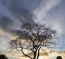 Tree Silhouette by Trevor Coultart