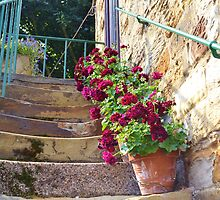 Worn Steps and Flowerpots by jmfotoz