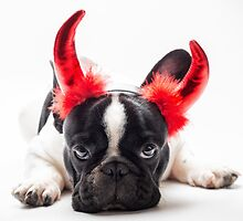 bulldog dressed up as a devil  by Dobromir Dobrinov