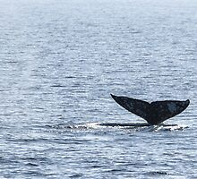 Gray Whale Tail by Henrik Lehnerer