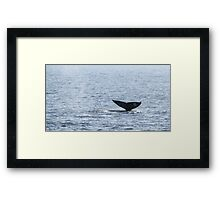 Gray Whale Tail Framed Print