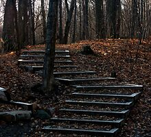The Stairs In The Woods by Paul Kepron