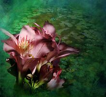 Pink Petals with lily pads by Doria Fochi