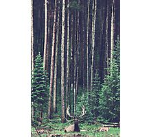 Oh Deer. Photographic Print