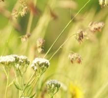 Prairie Wildflowers Sticker