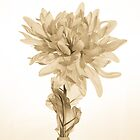 Vintage Artificial Flower by mlphoto