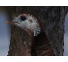 Portrait of a Wisconsin Wild Turkey Photographic Print