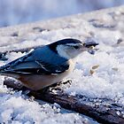 Nuthatch by Paul Kepron