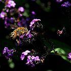 Bee on purple flowers (2) by LeJour
