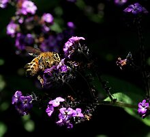 Bee on purple flowers (2) by LeJour