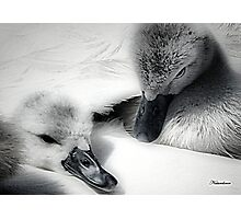 Wrapped In Swans Down Photographic Print