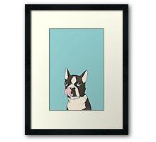 Hungry Boston Terrier (Black) Framed Print