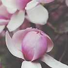 Magnificent Magnolia by Mohini Patel Glanz
