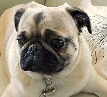 Pepe the Pug by printerbill