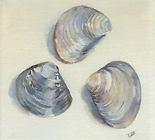 CLAM SHELLS by Tracy Sheffield