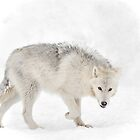 The Wolf who lost his tail.... by Poete100