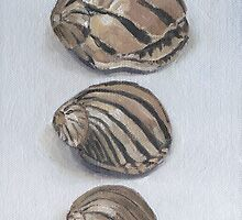 ZEBRA SHELLS by Tracy Sheffield