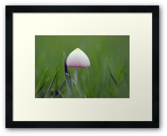 A tiny white mushroom hiding in the grass by Clare Colins