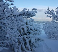 Snowy Trees over looking Reykjavik by redstarsam
