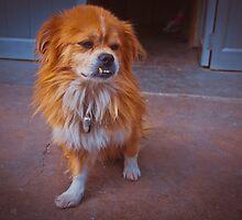 Ugly tibetian dog by Anna Alferova