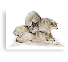 Lazy Day Wolves Canvas Print