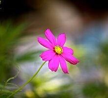 a flower  by OlliePhotograph
