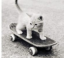 Cat on Skateboard by ilikefood