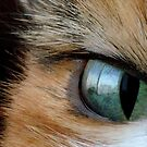 CAT EYE by Betsy  Seeton