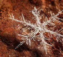 Snowflake On Mars by Dan Dexter