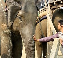 Reaching Out To An Elephant by KatyF