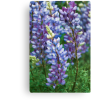 Dancing Lupines - Spring In Central California Canvas Print
