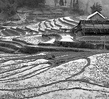 Sapa, Rice Terraces and House, Vietnam by paulsborrett