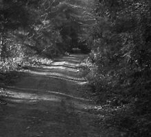 Dark country lane - Nefryn by trevorh