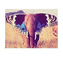 Butterfly Elephant by xox-